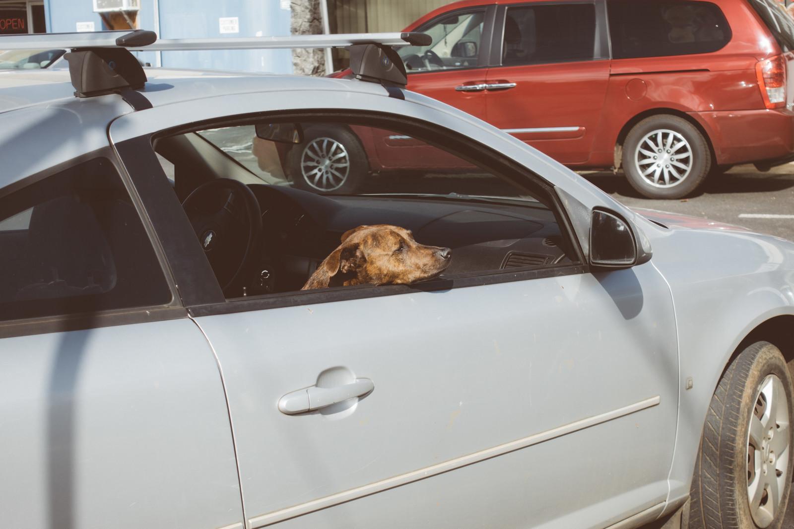 中古車を使ったレンタカー会社
